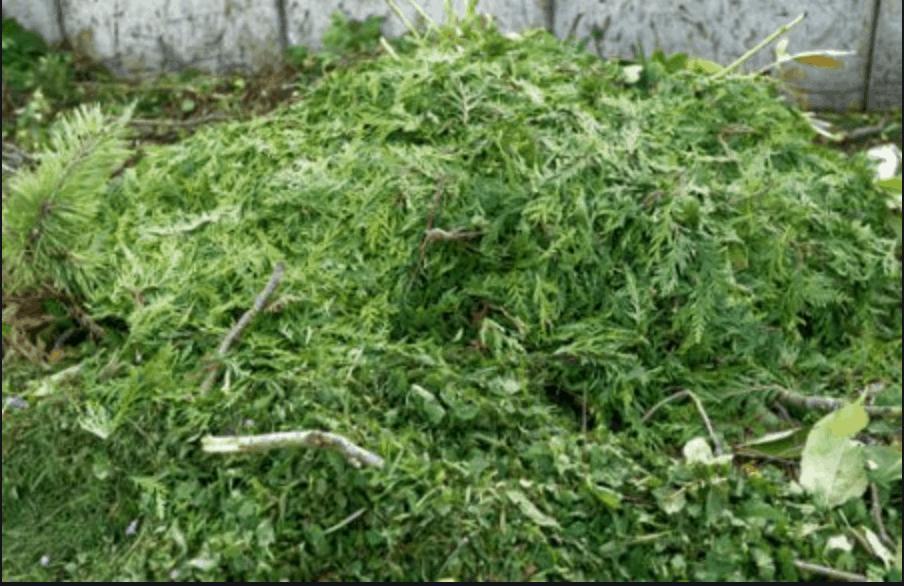 Déchets verts, qu'en faire ?